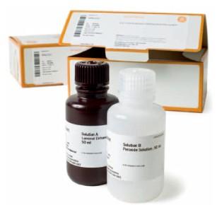 Amersham™ ECL™Prime 蛋白印迹试剂 | Whatman滤纸滤膜代理