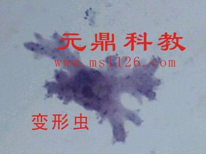 中国生物器材网--各种动物切片--性能参数