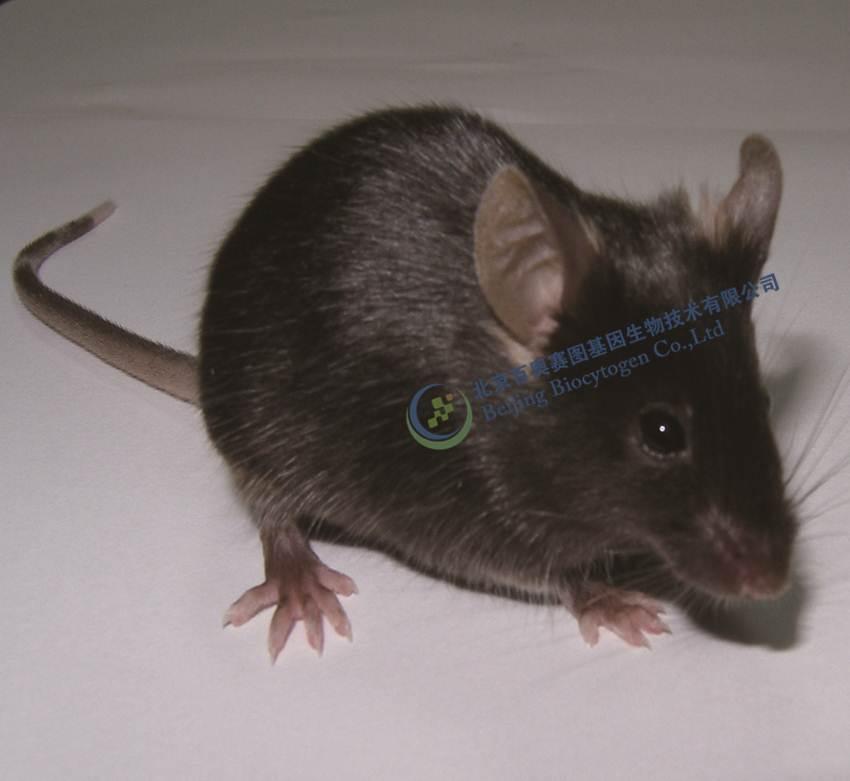 中国生物器材网--talen基因敲除小鼠--性能参数