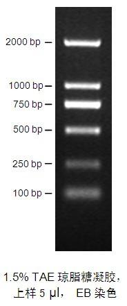 bp DNA 分子量标准图片