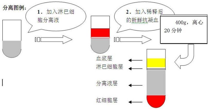 中国生物器材网--人淋巴细胞分离液--性能参数