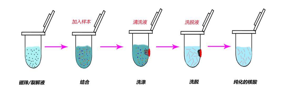 中国生物器材网--磁珠法核酸提取试剂盒--性能参数