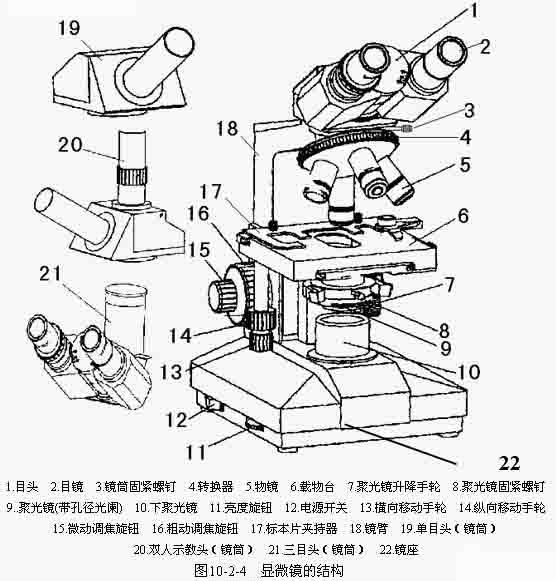 2.1 显微镜的结构及使用方法