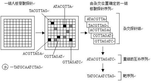 基因芯片的基本原理同芯片技术中杂交测序(sequencing by hybridization, SBH)。即任何线状的单链DNA或RNA序列均可被分解为一个序列固定、错落而重叠的寡核苷酸,又称亚序列(subsequence)。例如可把寡核苷酸序列TTAGCTCATATG分解成5个8 nt亚序列:   (1)     CTCATATG   (2)     GCTCATAT   (3)    AGCTCATA   (4)    TAGCTCAT   (5)   TTAGCTCA   这5个亚序列依次错开一个