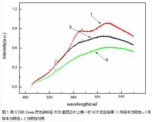 郝麟1) 朱平1)* 于晓梅2) 张大成2) 赵新生3) 欧阳贱华3 (1)北京大学第一医院 北京 100034; 2)北京大学微电子学研究所 北京100871; 3)北京大学化学与分子工程学院 北京100871) 目的: 我们设计一种含有大量微反应池的PCR基因芯片,能对基因的重排,突变和缺失等基因变异进行检测。PCR基因芯片的关键问题是如何检测出来在微反应池内获得的极其微量PCR产物。本文应用一些临床病例的实例标本,观察能否在基因芯片上进行不同的荧光掺入PCR反应并根据基因芯片上荧光的变化判断基因的变