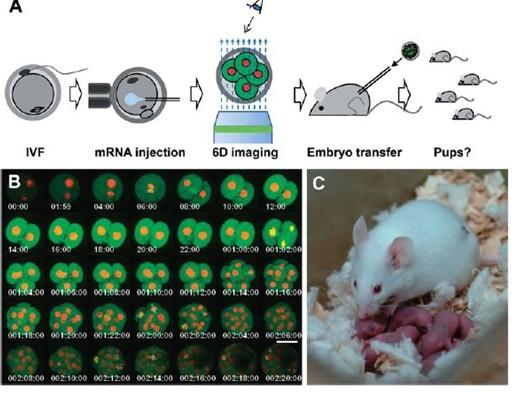 6d活细胞观察
