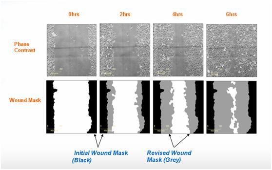细胞划痕实验步骤