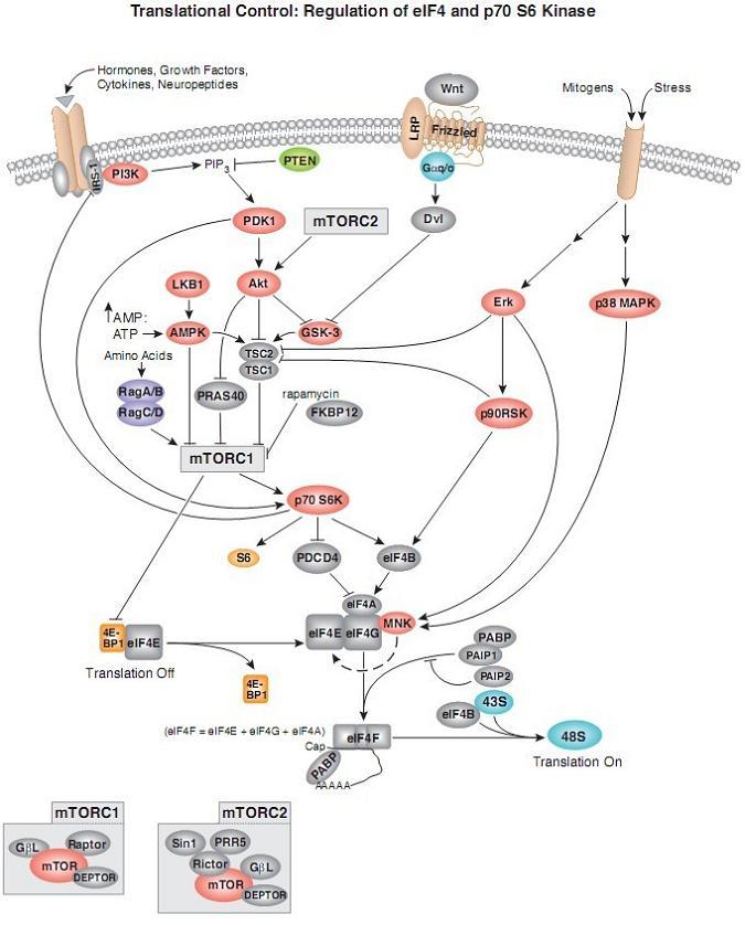 艺术囹�a�b-�/g_b cell receptor 信号通路图及位点