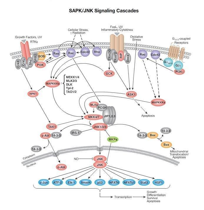 小分子抗体结构图