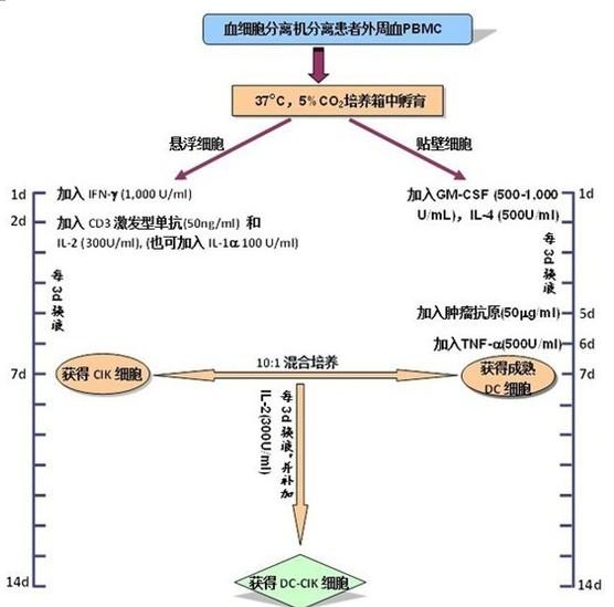 DC CIK细胞制备方法