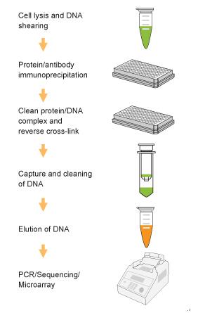 中国生物器材网—植物染色质免疫沉淀试剂盒的使用