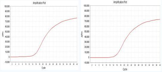 b.基线(Baseline):是指在PCR扩增反应的最初数个循环里,荧光信号变化不大。接近一条直线,这样的直线即是基线。基线调整包括基线起点与基线重点,起点一般设在2-3个CT,终点设在扩增曲线开始上扬即进入指数增长期的CT值前2-3个CT,终点设置太靠前会降低CT值,太靠后则会增加CT值。如仪器默认基线期与上述基准不一致,很可能需要人为设定调整。