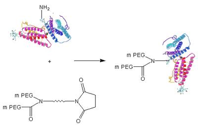 蛋白质的二级结构模式图