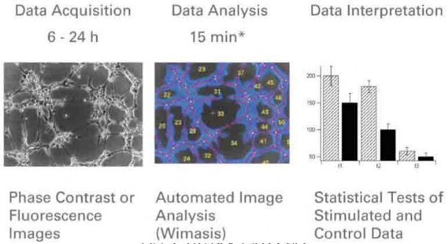 中国生物器材网—血管生成实验步骤-实验方法完善版