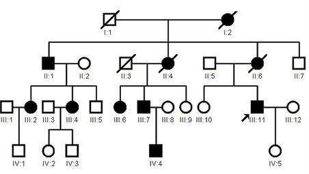遗传连锁图谱_全基因组连锁分析和高通量测序结合寻找疾病相关基因——中国 ...