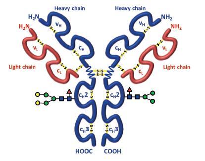 属的单克隆抗体利妥昔的分子结构示意图