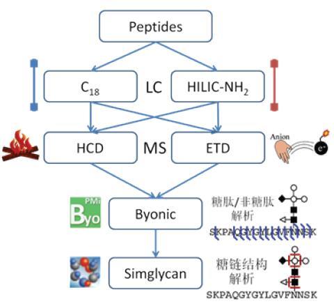 生物糖类知识结构图