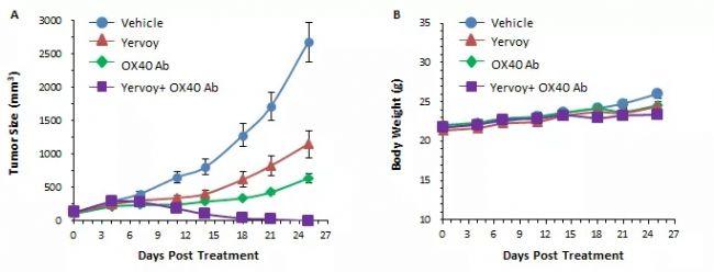 双特异性抗体能成为肿瘤免疫下一个风口?