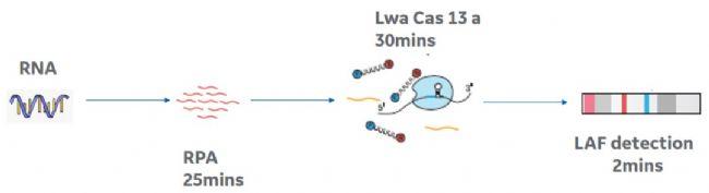 新冠状病毒SARS-COV-2的快速检测及侧向流技术的应用