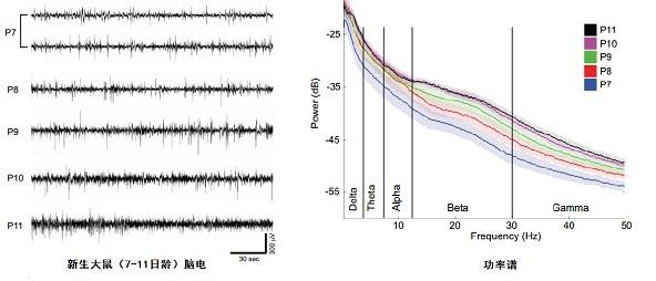 中国生物器材网--小动物脑电/心电遥测记录系统