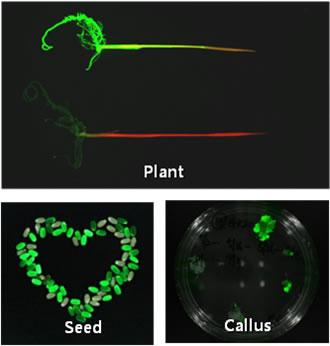 中国生物器材网--fobi活体动物(肿瘤)荧光成像仪