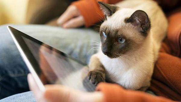 触屏行为学实验系统不仅能极大的缩短实验动物的训练