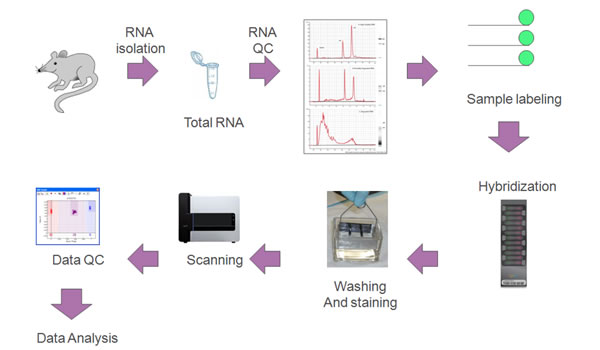 中国生物器材网--illumina全基因组表达谱芯片