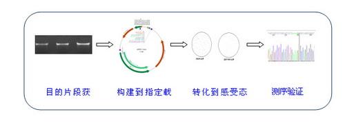 中国生物器材网--分子克隆