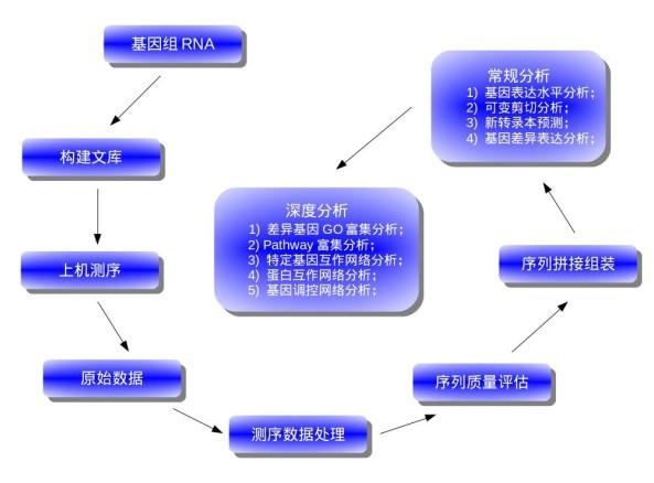二代测序建库方法