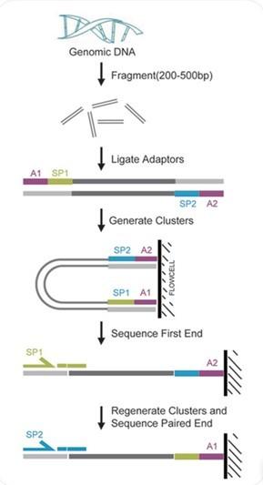 中国生物器材网--基因组重测序