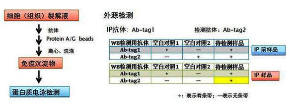 中国生物器材网--免疫沉淀(ip)实验服务外包