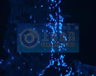 中国生物器材网--免疫组化(ihc)技术服务
